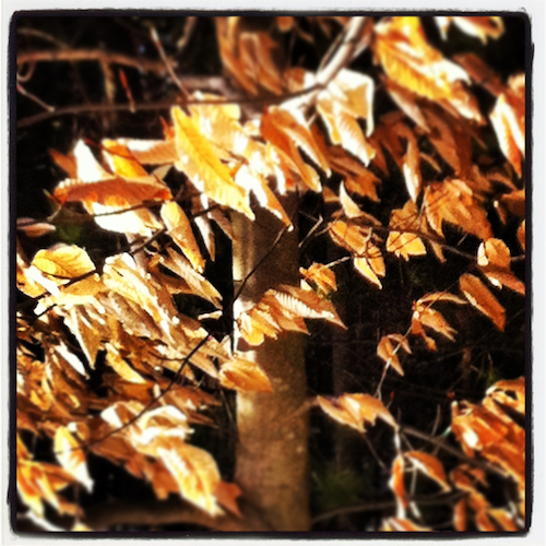 Winter's Leaves